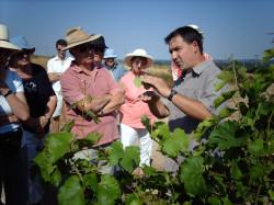 Wine tasting tours Spain