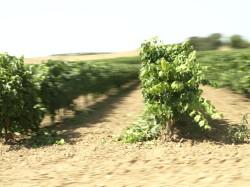 5'0 Great Cava wine tasting tour