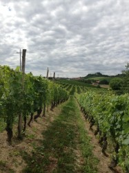 Cascina del Pozzo back for another Wine Pleasures Workshop