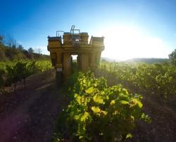 Wine Plesures 50 Great Cava country bike tour