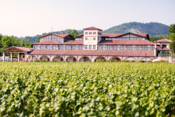 Corte Aura Franciacorta 50 Great Sparkling Wines of the World