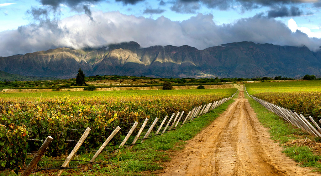 The Secret's Out: Exciting Wines from Bolivia